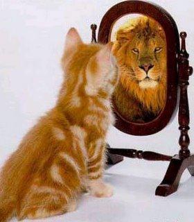 http://confidenceandjoy.com/wp-content/uploads/2009/01/catandmirror.jpg