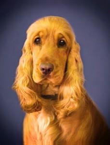 dog-1