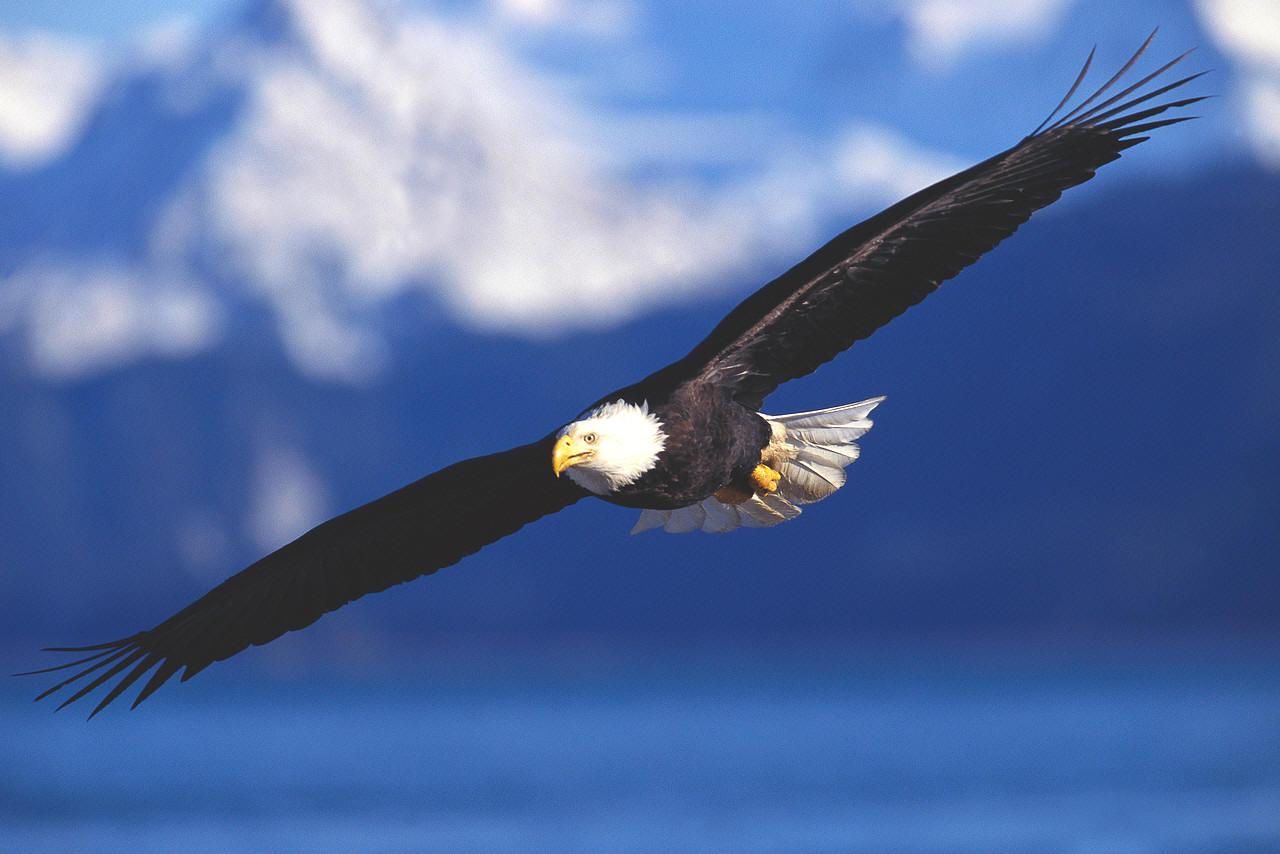 Renewed Like The Eagle Michael A Verdicchio